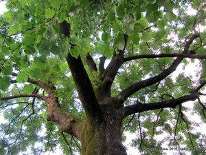 В городе сохранился живописный парк XVIII в. с высокими деревьями с густой и раскидистой кроной, с качалями — каруселями для малышей, и с лавочками для \