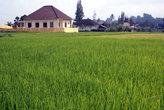 Дом на зеленом рисовом поле