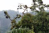 Летающие лисицы на дереве