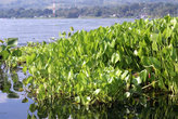 Трава на берегу озера Тоба