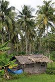 Дом на рисовом поле