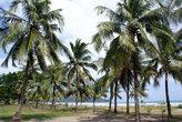 Пальмовая роща на берегу