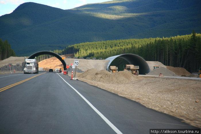 Это недостроенный мост для животных над хайвэем. Эти тоннели длинной метров 30.
