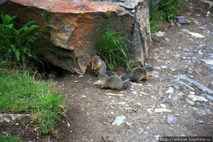 У этих хомячков норка под камнем.
