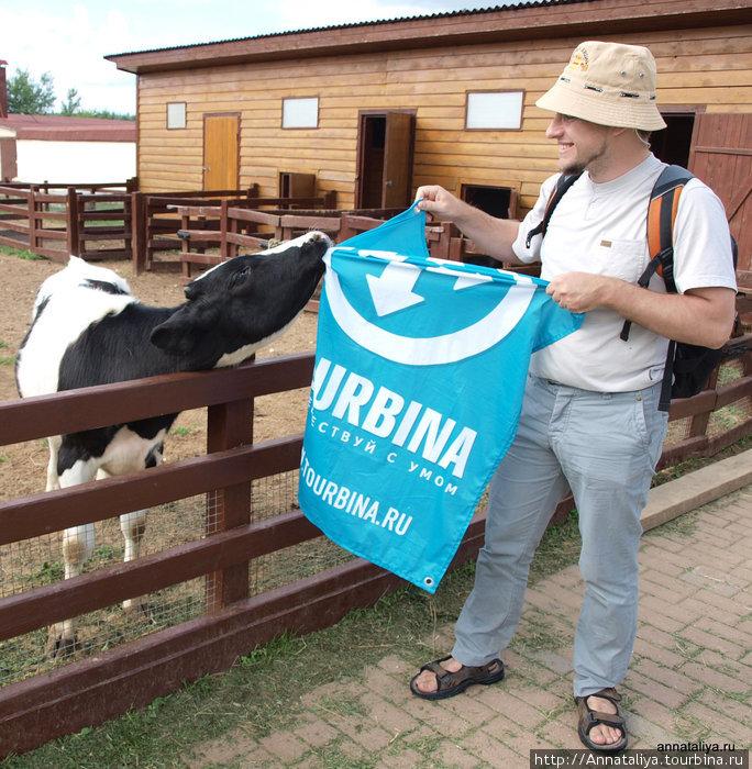 Бычок пробует на вкус флаг Турбины. :))