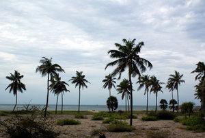 Пальмы на берегу моря