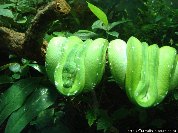 В берлинском зоопарке — такие зеленые змеи)