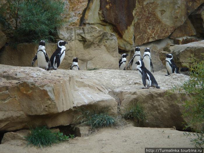 Забавные пингвины, которые стали любимцами многих благодаря мультфильму Мадагаскар ;-)