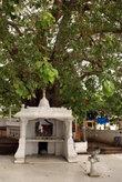 Под священным деревом