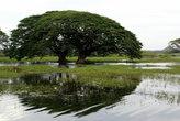 Дерево на краю водохранилища