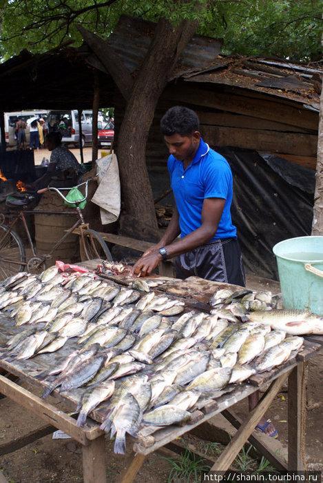 рыбалка торговцево