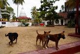 В монастыре встречают собаки