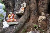 Будды на корнях дерева