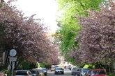 Улица цветущих сакур