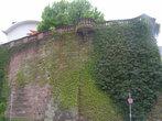 Мохнатая стена