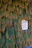 Стена хасагая увешана снопиками риса