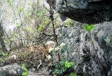 Жизнь и камни на вершине