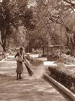 Парк, Где Растут Бамбуки