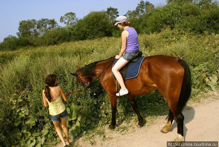 Лошади очень любят свернуть с тропы и полакомиться придорожной травой...