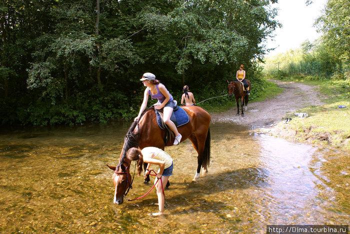 Минут через двадцать мы достигли маленькой, но очень чистой речки с быстрым течением. Лошадки радуются прохладе и пьют...