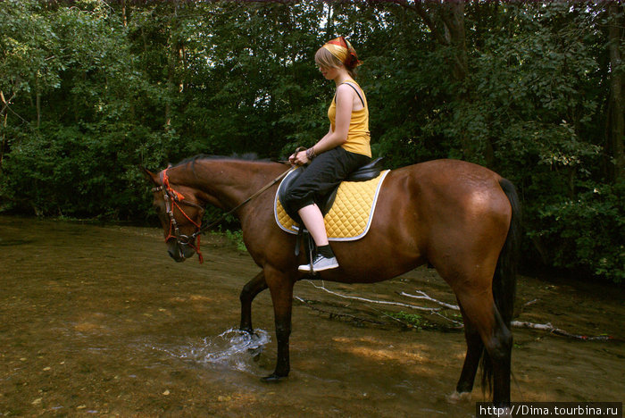 Лошади любят и побрызгаться