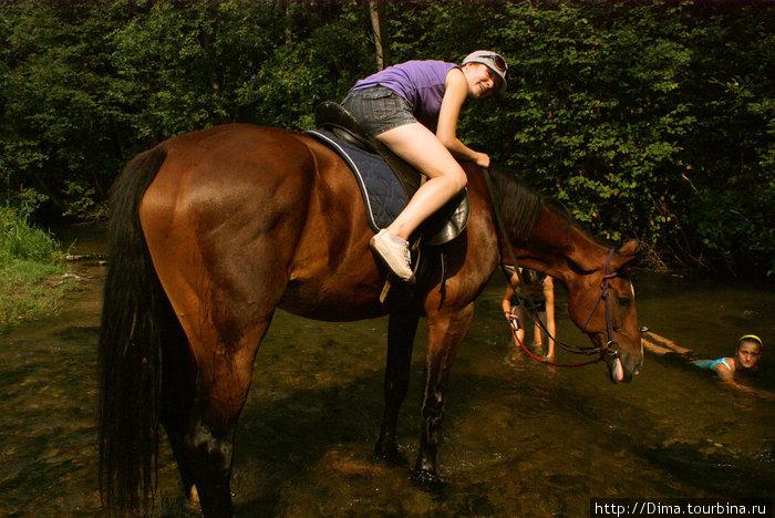 Лошадь любит ласку... А у этой ещё была привычка показывать язык. :)