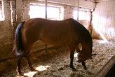 Большая лошадь. На ферме мы видели коня, который был ещё больше...