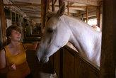Лошади интересны в общении. А ещё их можно кормить яблоками, морковкой и сеном...