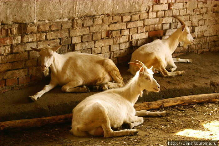 Другие обитатели фермы