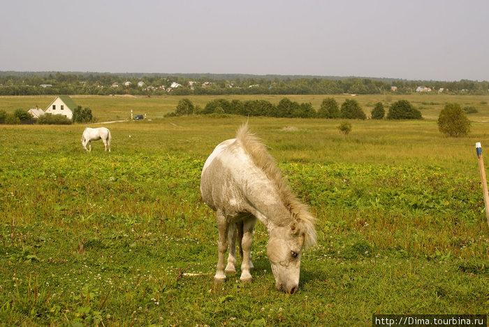 Пони. Он спокойно пасся вначале в беседке, потом его выгнали на лужайку, а вскоре его и вовсе куда-то увели...