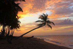 Пальмы и закаты