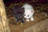 Котята в хлеву