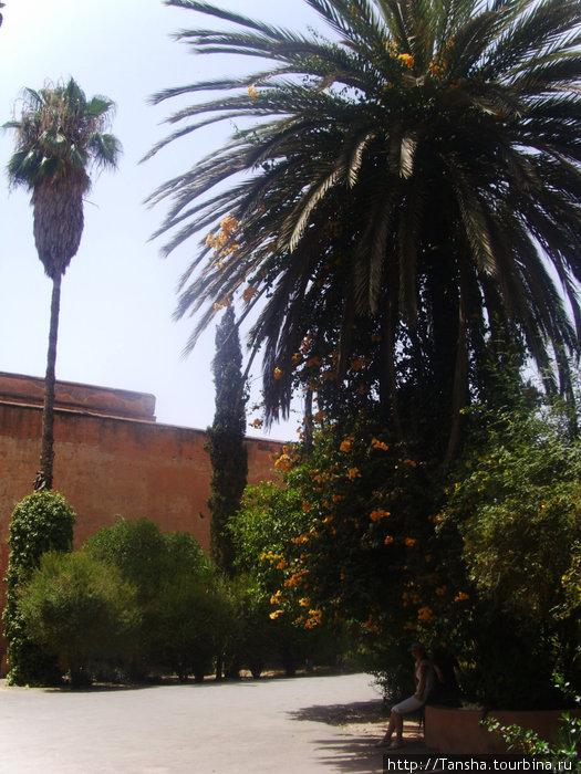 Пальмы на территории Дворца