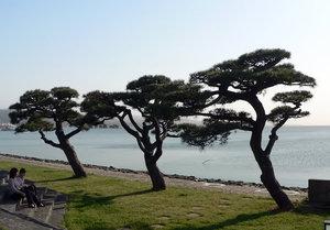 На берегу озера Синдзико