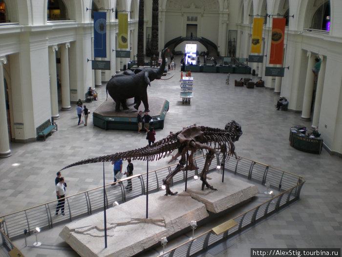 «Сью» — наиболее полный на сегодняшний день скелет тираннозавра (с)википедия