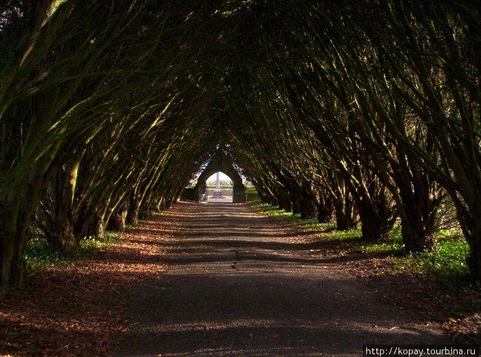 Красиво посаженные деревья создают потрясающей красоты аллею, по которой так здорово пройтись и просто подумать о чём-нибудь прекрасном. Город Мэйнут, территория Национального университета Ирландии.