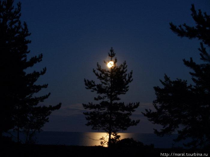 В загадочном свете луны