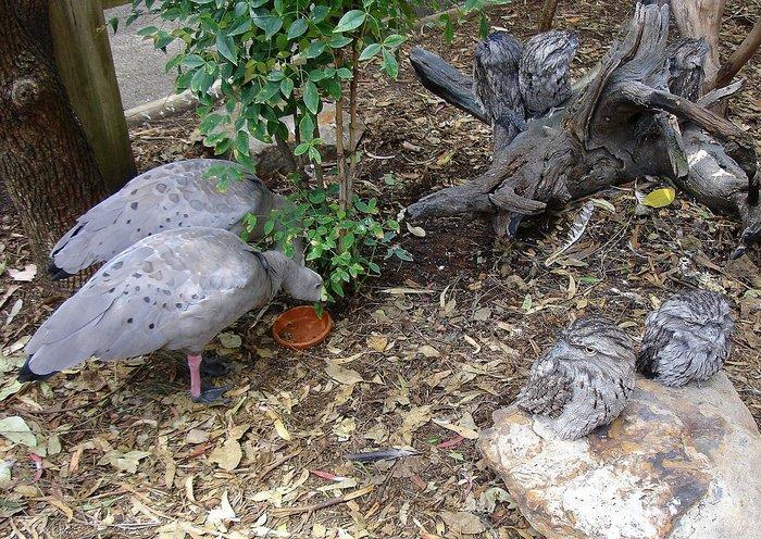 на фото 7 птиц