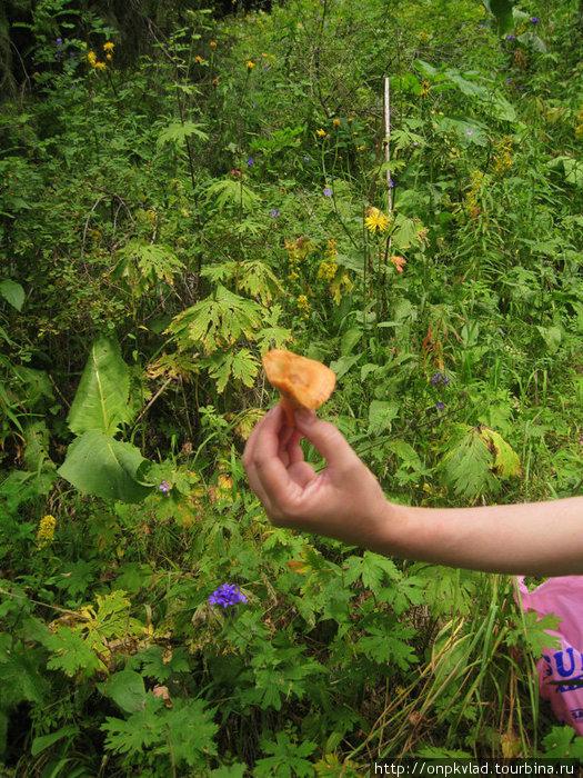 Гриб рыжик, найденный в горах, там же и сфотографированный. Авторская фотография.
