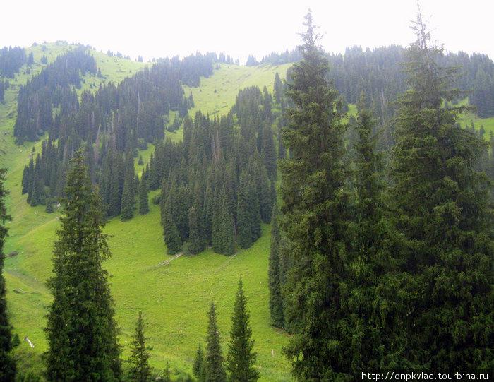 Природа со склона. Авторская фотография.