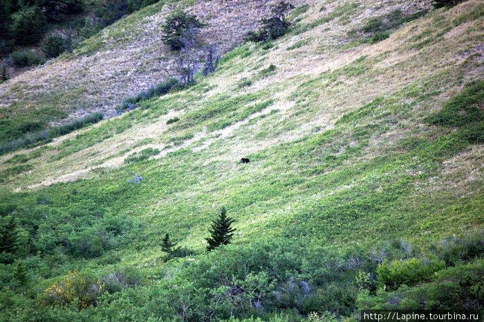 Медвед на склоне