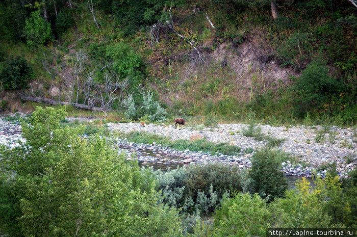 Медвед у речки рядом с полем для гольфа