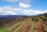 Дорогами вулкана Сьерра Негро