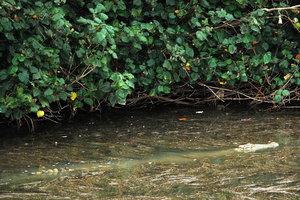 крокодила не так то легко бывает увидеть в воде