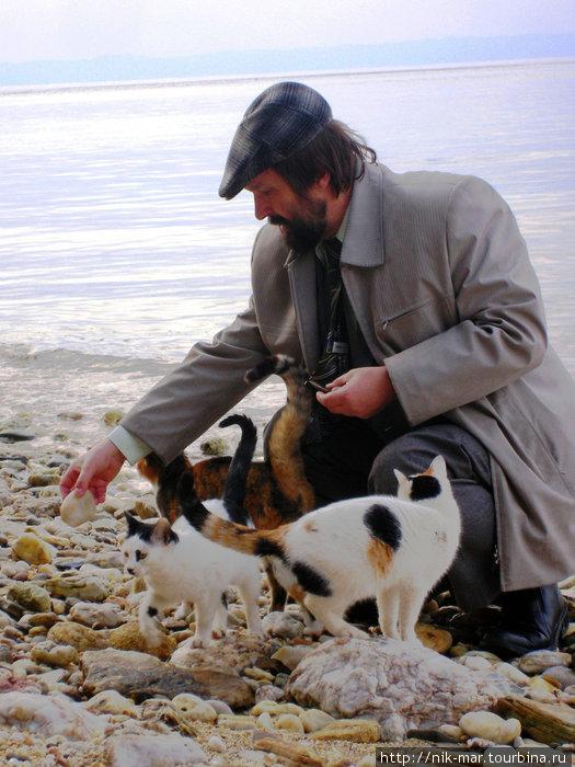 Греция, Халкидики. Кошки сопровождают гостей здешних отелей повсюду.
