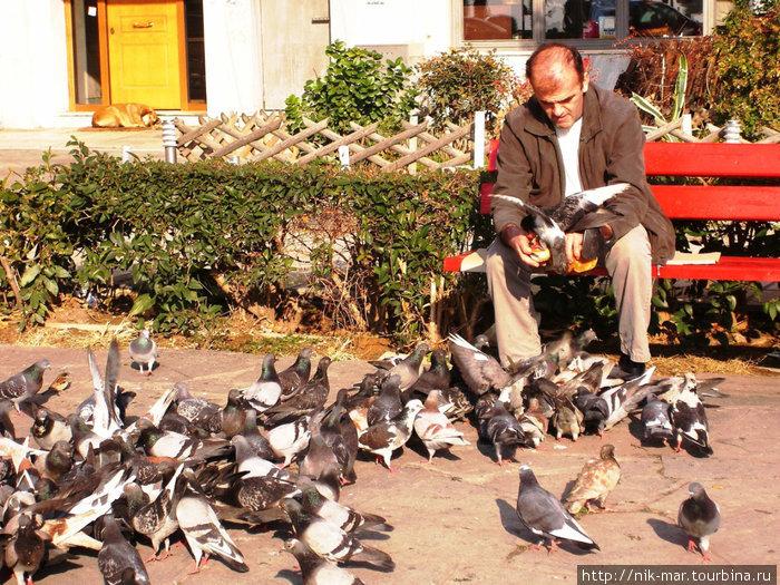 Салоники. Местные жители очень любят кормить голубей