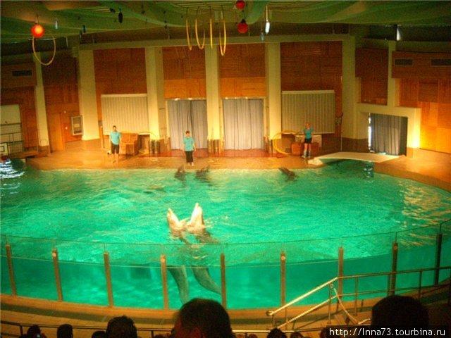 Дельфинарий 2.