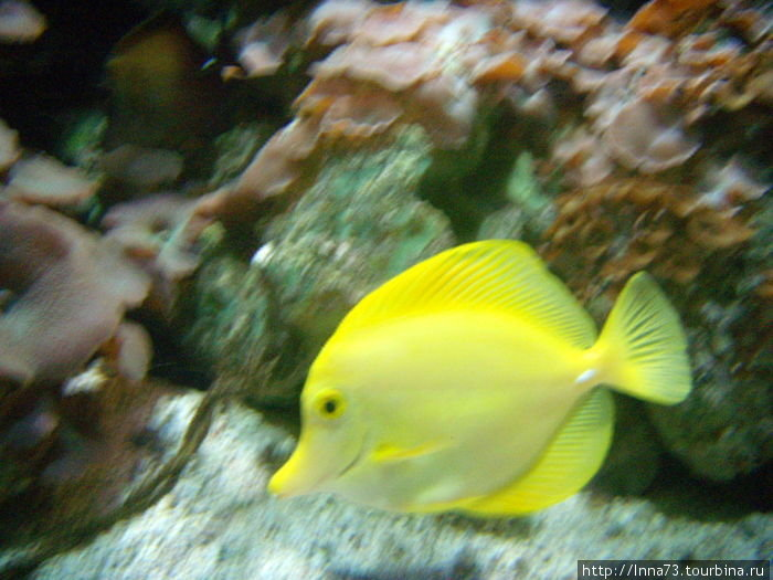 Тропическая рыбка