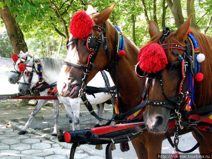 Албенские лошадки.
