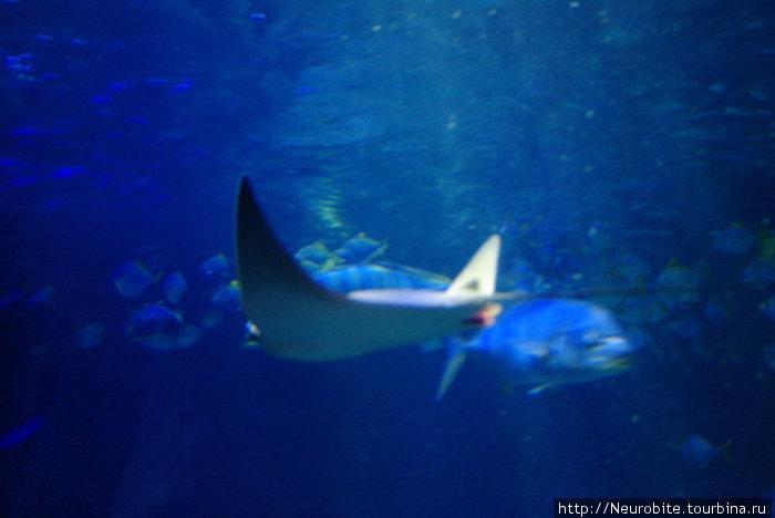 Шпайерский аквариум